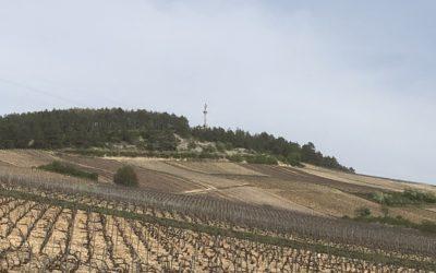 Pinot noir, Chardonnay  : le duel des cépages.
